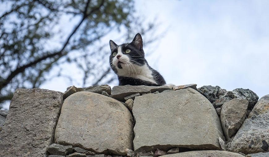 Где живёт больше всего кошек?