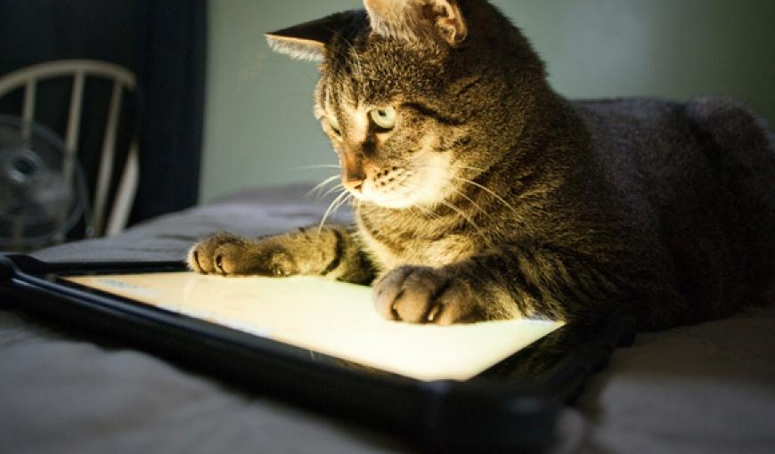 Игры на планшет про кота