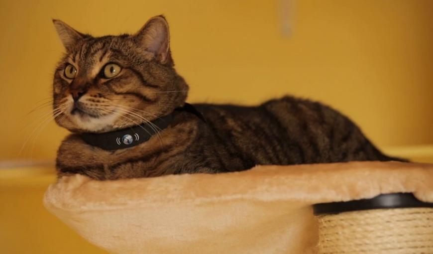 Ошейник с датчиком для кота