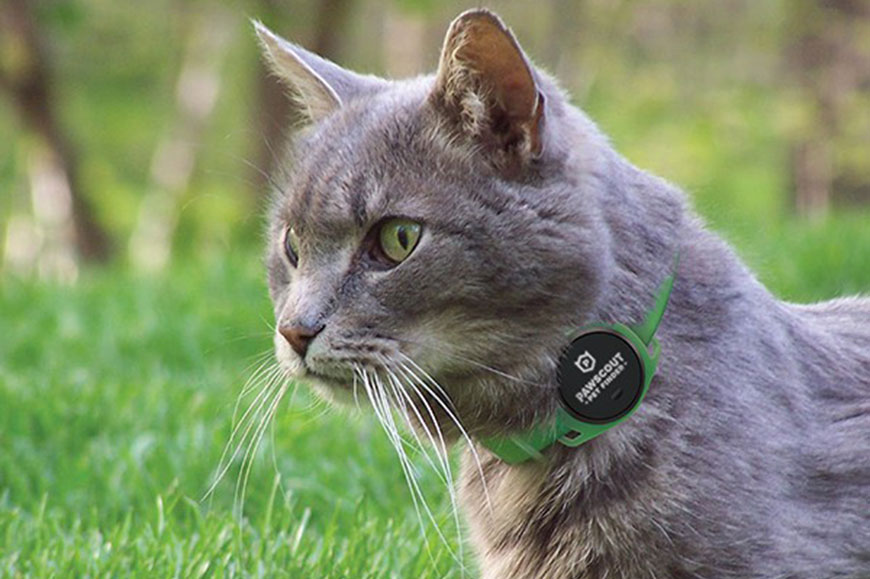 Pawscout Smart Tag